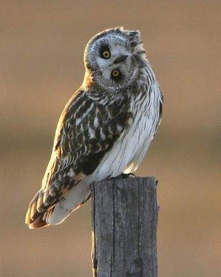 owlbaroo.jpg