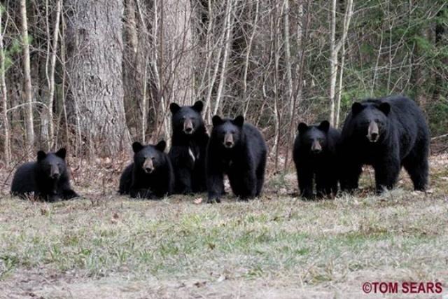 bearfamilybabies