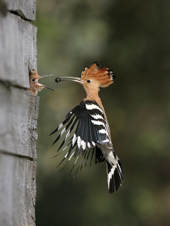 Fw Great Wildlife Photos!! Please Share them....... extremely rare photography (1)