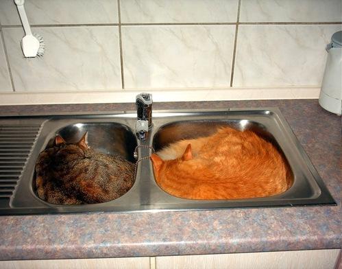 catsinsinks