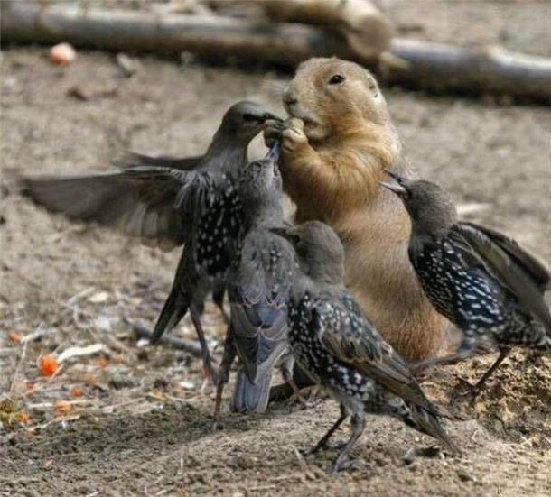 squirrelbirds