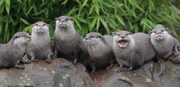 !!1aa otters3