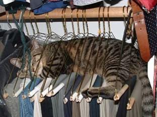cat-in-hangers