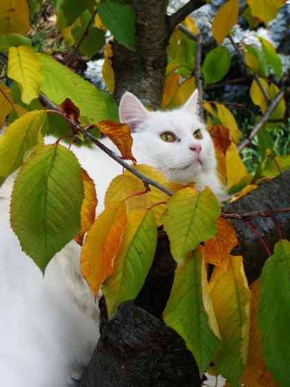 Cat caught in a tree
