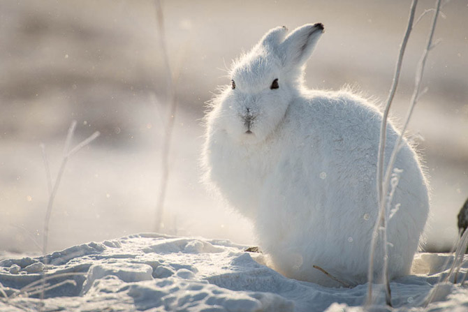 Wild_Hare_Photography_by_Ivan_Kislov_4