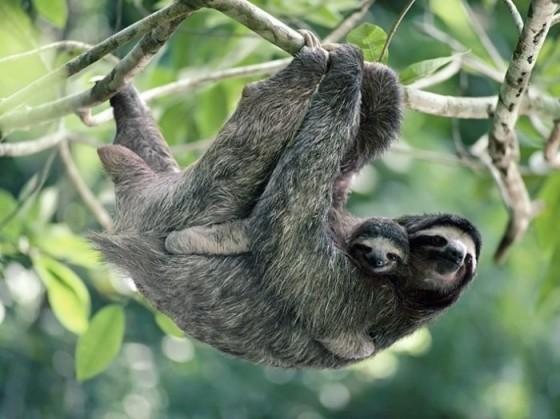 sloth_full