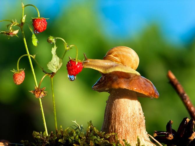 Snail-lover_by_Vyacheslav_Mishchenko_2