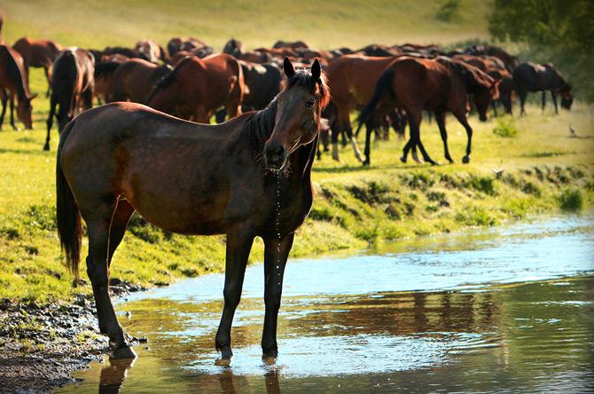 Beautiful_Horses_by_Fotojazz_6