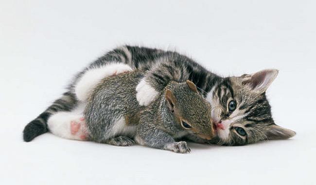 cute_funny_animals_19
