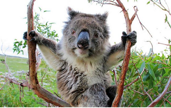 cute_funny_animals_33
