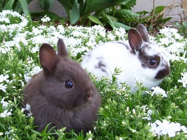 cute_funny_animals_7