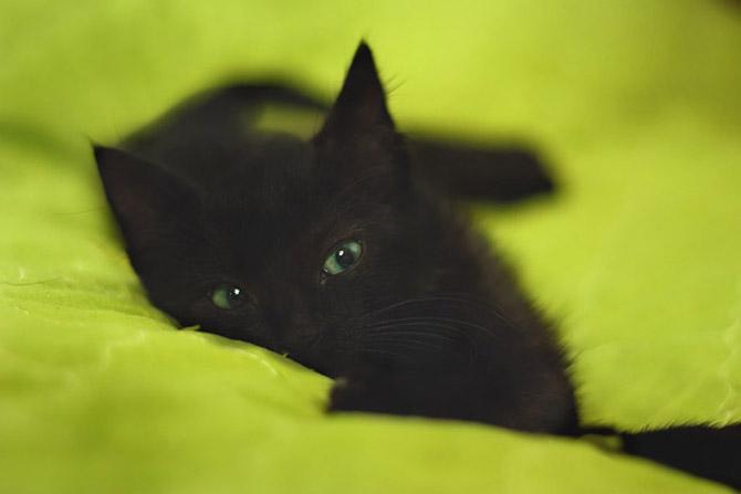 kitten_lesson (5)