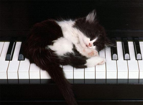 kitten_lesson