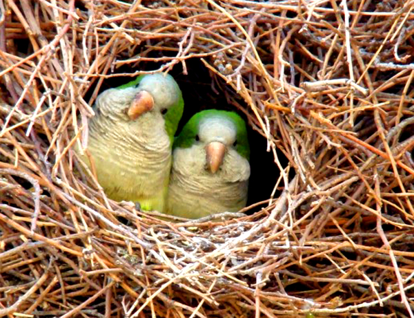 beautiful-birds-14