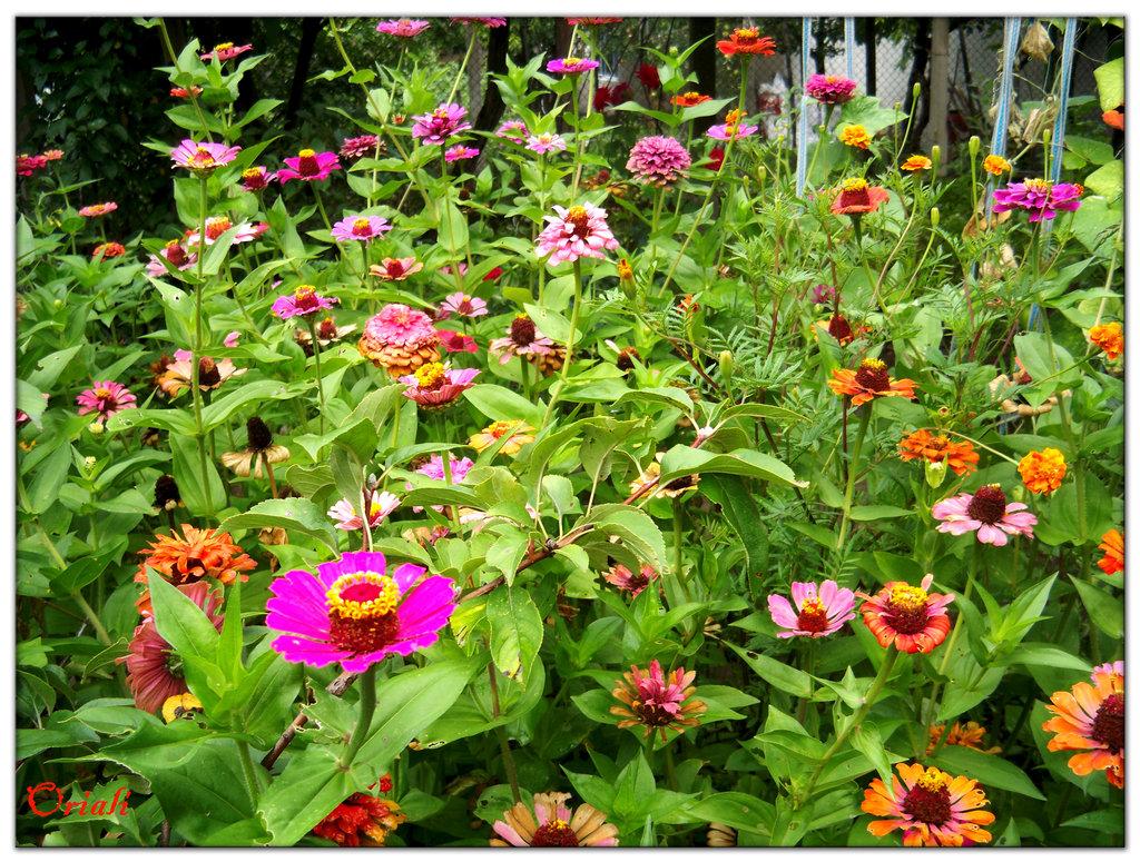 Grandmothers garden 1