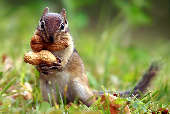 cute_squirrels_11