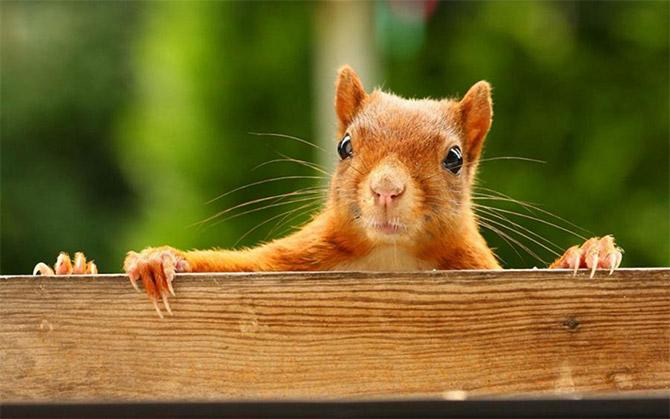 cute_squirrels_5