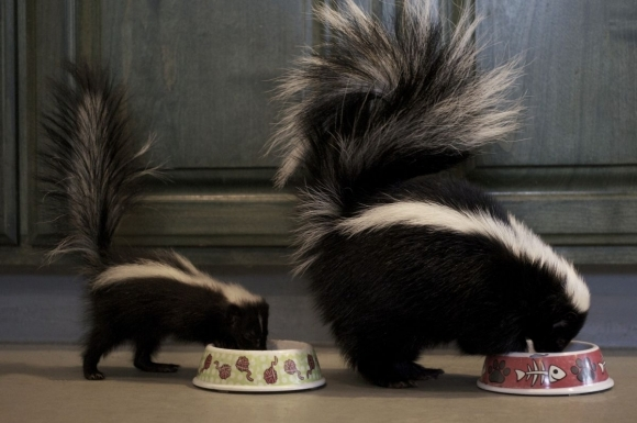 two_skunks