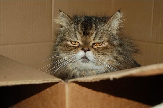 Unhappy-Cat-in-a-Box-632x420