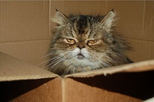 Unhappy-Cat-in-a-Box_300