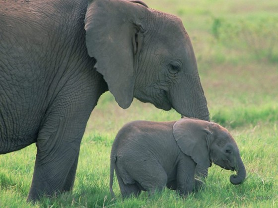 baby-elephant-pictures-20454-hd-wallpapers