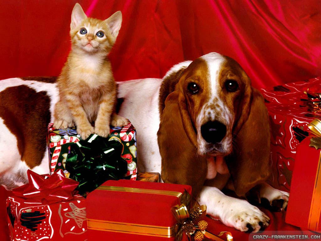 kitty-christmas-dog-wallpapers-1024x768