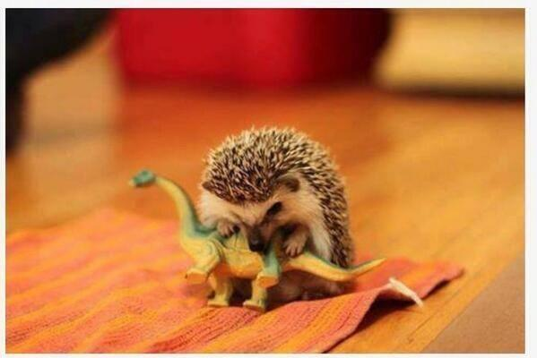 HedgehogDinosaur