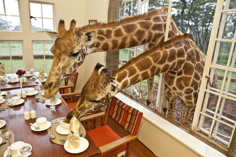 Robin Moore-Giraffe Manor, Nairobi