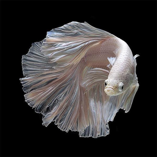 fish-1_0