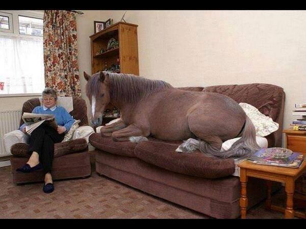horse_indoors