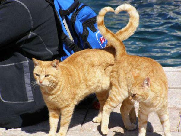 50-cats-heart-shape-with-ta