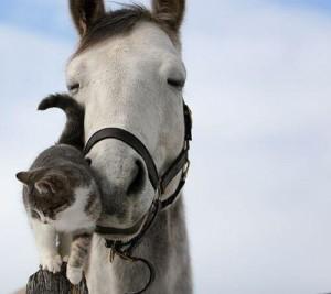 pony_kitten