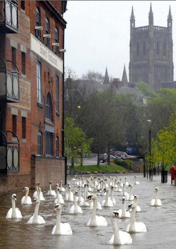 swans-worcester-floods