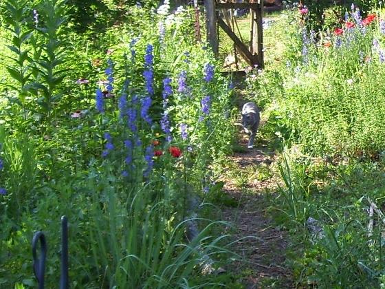 cat_garden