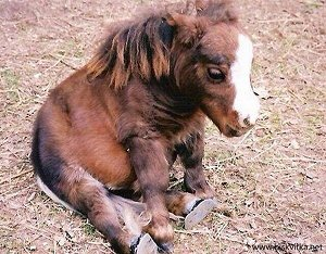 NC Links, Antidote du jour: A pony