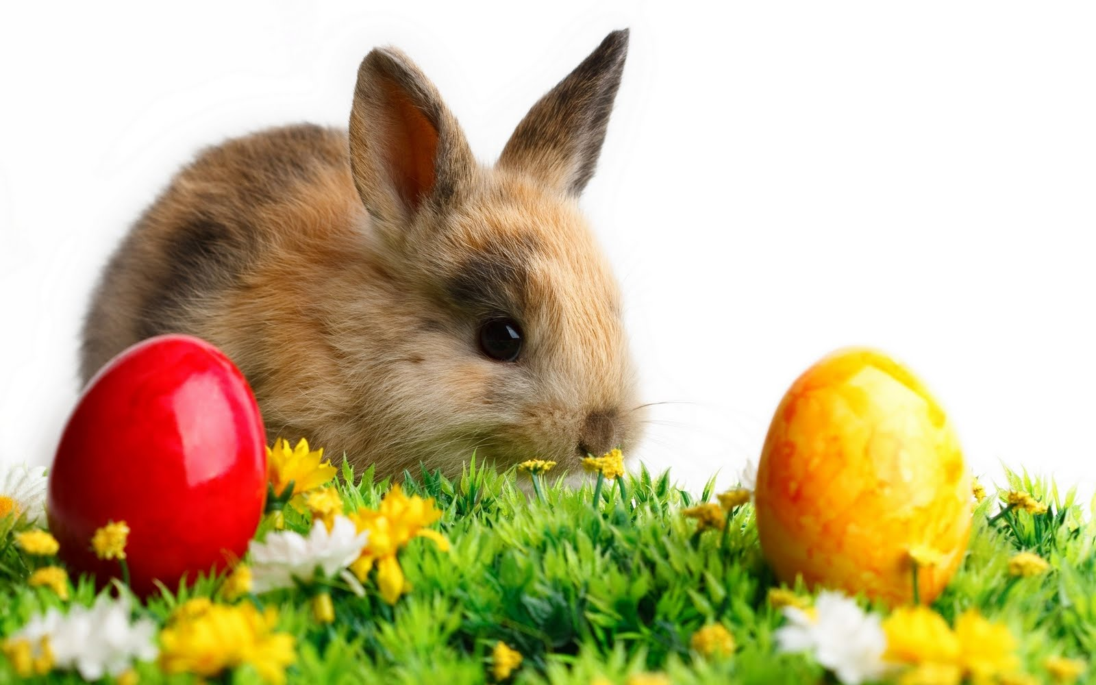 Easter-Bunny-Wallpaper-15