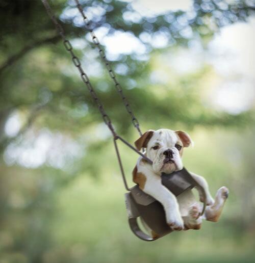 dog_swing