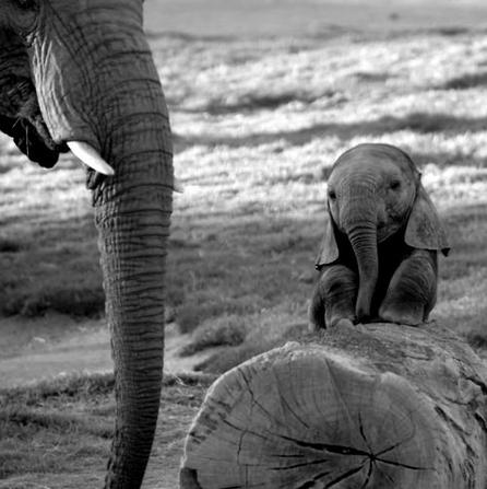 Antidote du jour: Baby elephant