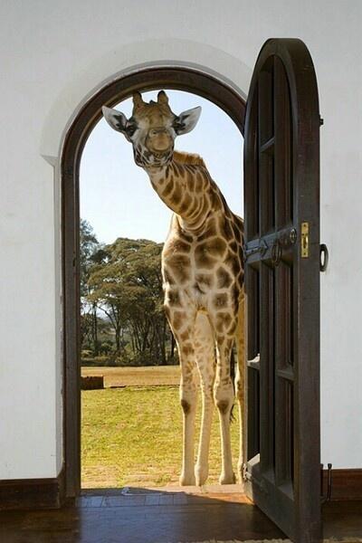 giraffe_door