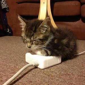 Kitten sleeping on Mac power supply