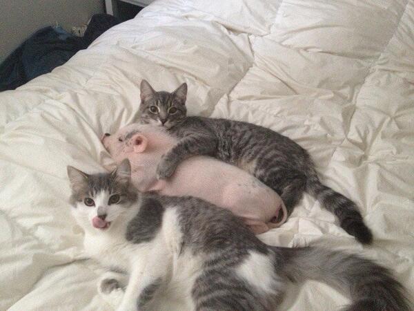 antidote_pigletcats