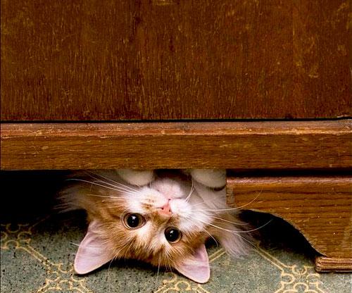 cute-kitten-3