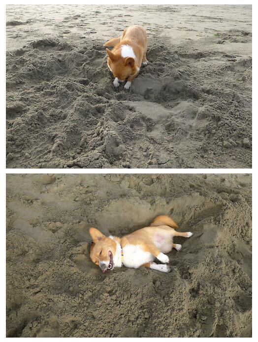 dog_sand