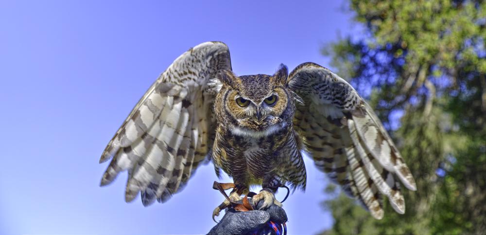 owl-CN2A1648