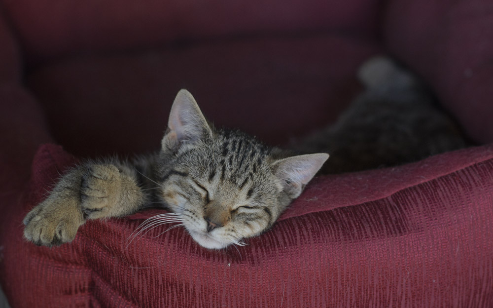 Links picture of sleeping kitten