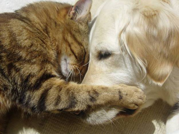 Links dog and cat sleeping together