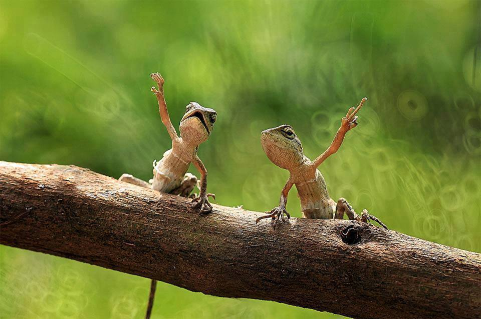 antidote_lizards