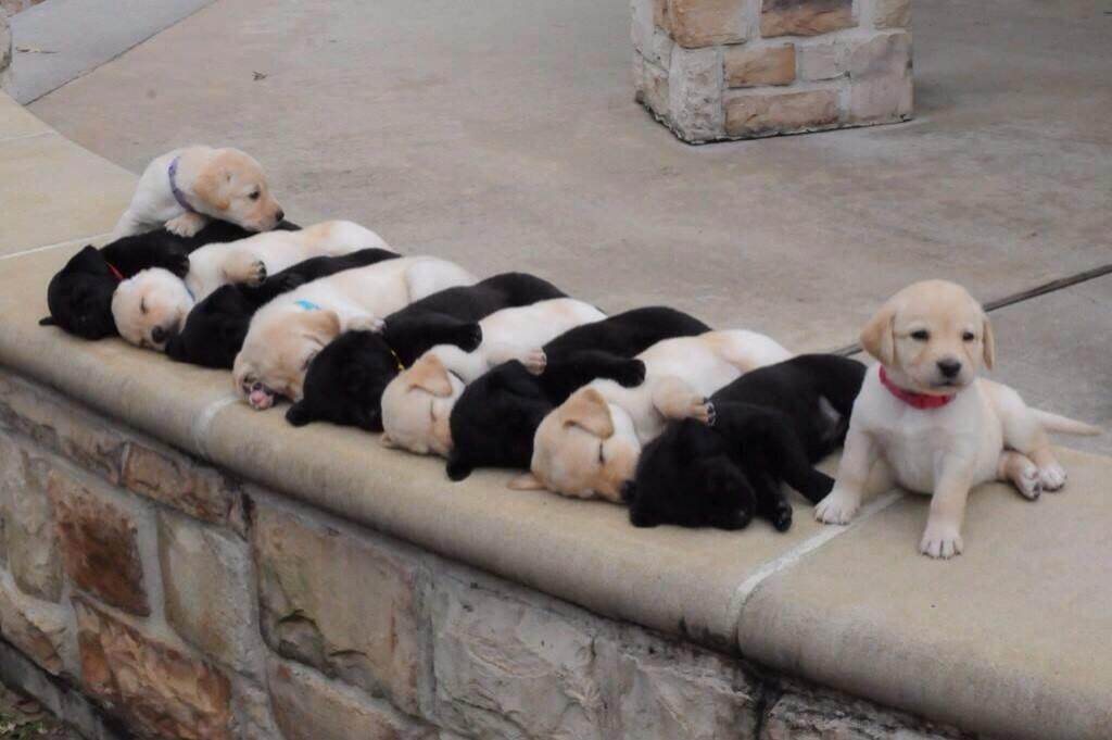 Links sleeping puppies in alternating colors