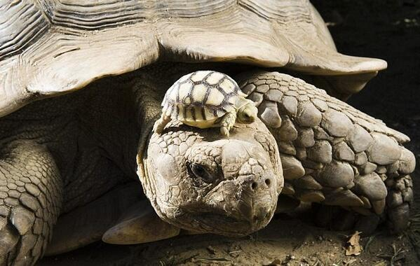 turtle_mom_and_child