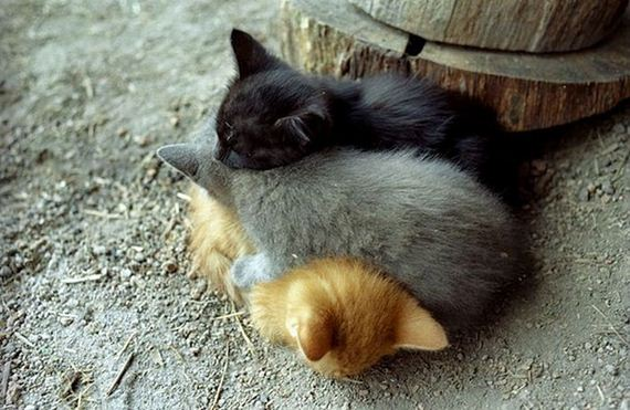 links sleeping cats